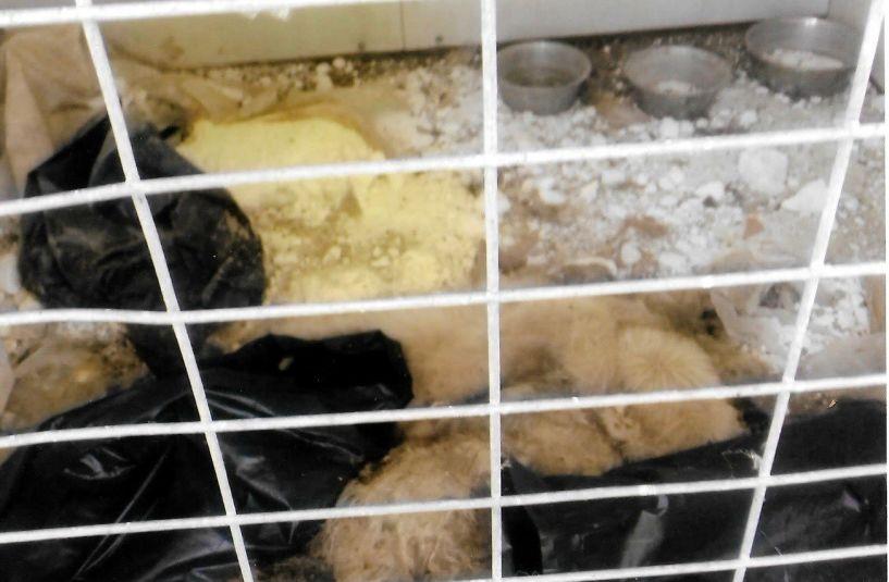 ΦΙΛΟΖΩΙΚΟΣ ΟΜΙΛΟΣ ΗΜΑΘΙΑΣ: Τηρεί το Νόμο ο Δήμος Βέροιας για τα αδέσποτα ζώα;